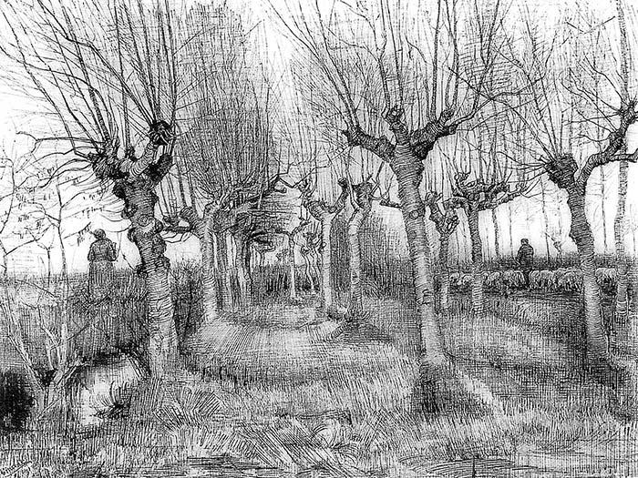 Pollard birches, 1884 Vincent van Gogh (1853-1890), Pencil, Pen, 39 x 54 cm