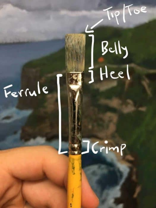 Paint Brush Anatomy