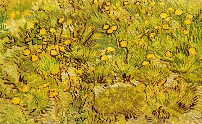 Vincent van Gogh, A Field Of Yellow Flowers, 1889