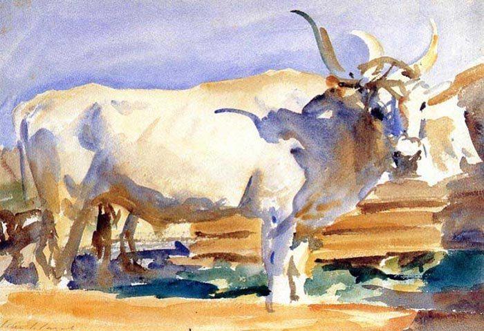 John Singer Sargent, White Ox at Siena, 1910