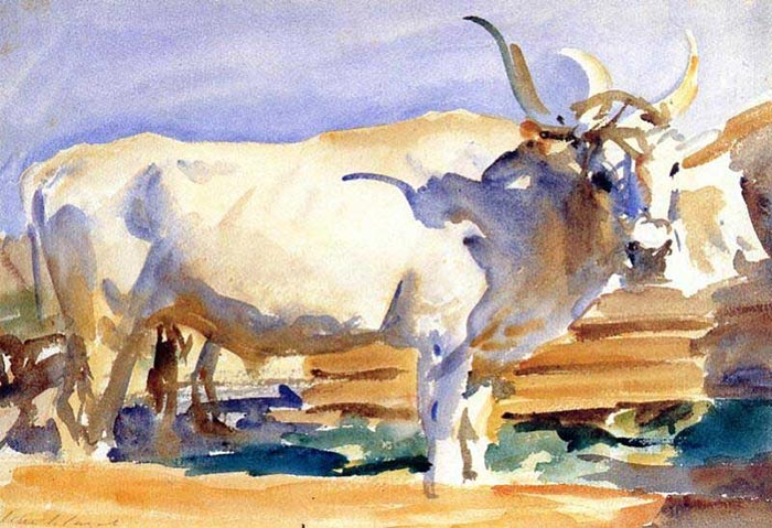 John Singer Sargent, White Ox at Siena, 1910