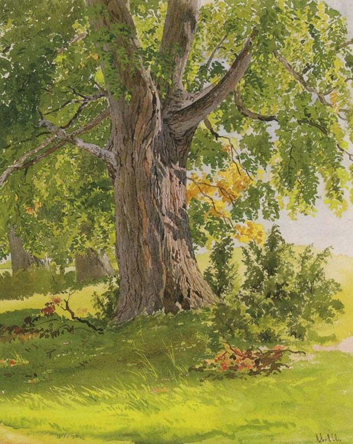 Ivan Shishkin, Oak, Lit by the Sun