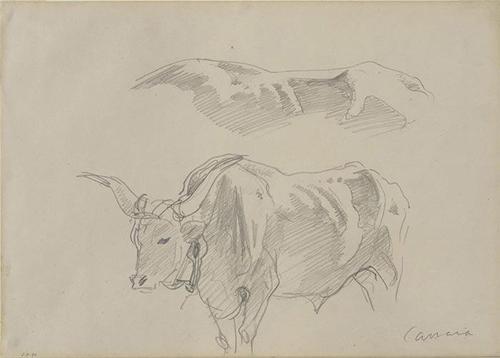 John Singer Sargent, A Sketch of Oxen, 1911