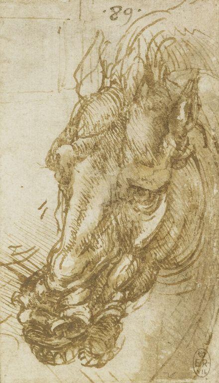 Leonardo da Vinci, Horse's Head, c.1503-1504