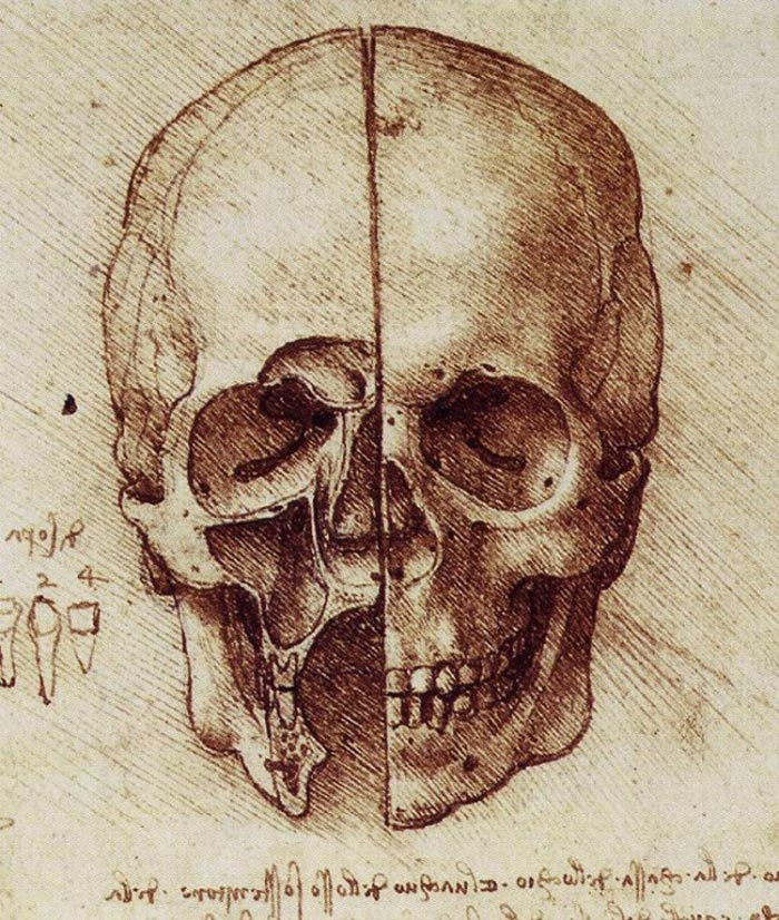 Leonardo da Vinci, The Skull