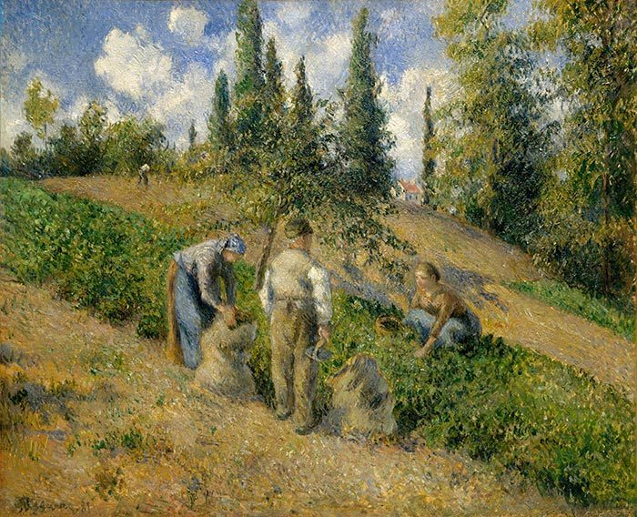 Camille Pissarro, The Harvest, Pontoise, 1881