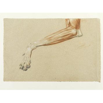 Edwin Landseer, Dog's Leg, 1821