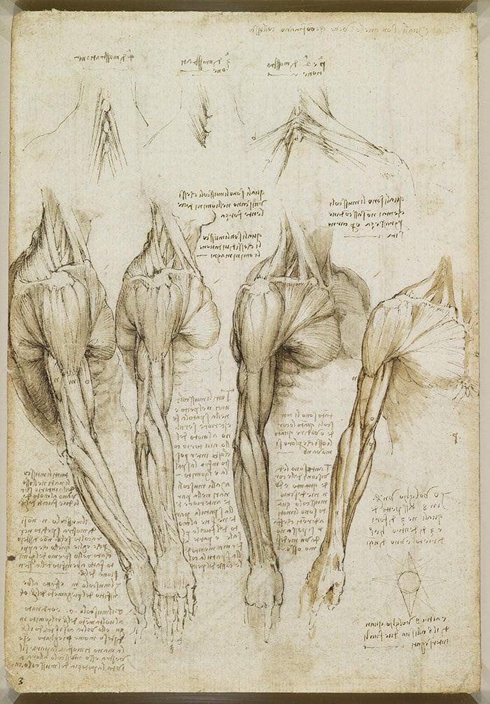 Leonardo da Vinci, Écorché Drawing