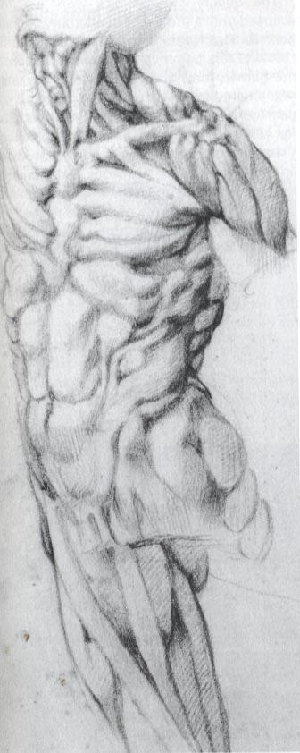 Michelangelo, Écorché Drawing