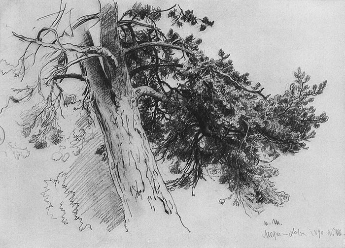 Ivan Shishkin, Part of the Trunk of a Pine, 1890