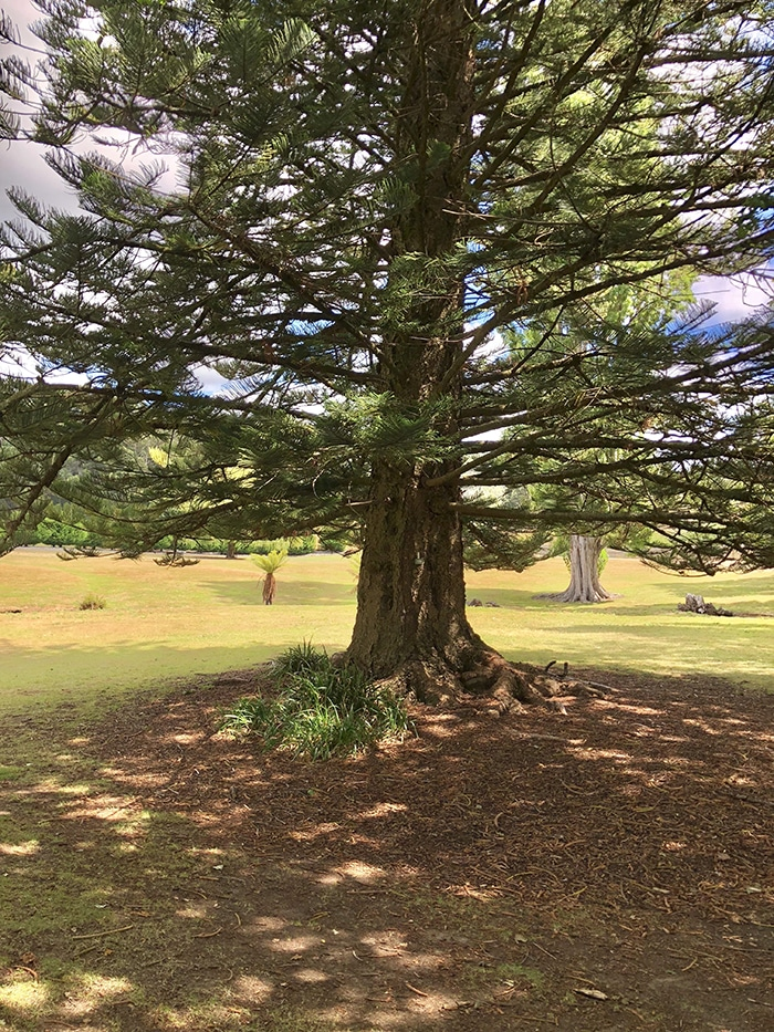 Dan Scott, Reference Photo, Tree, Dappled Light