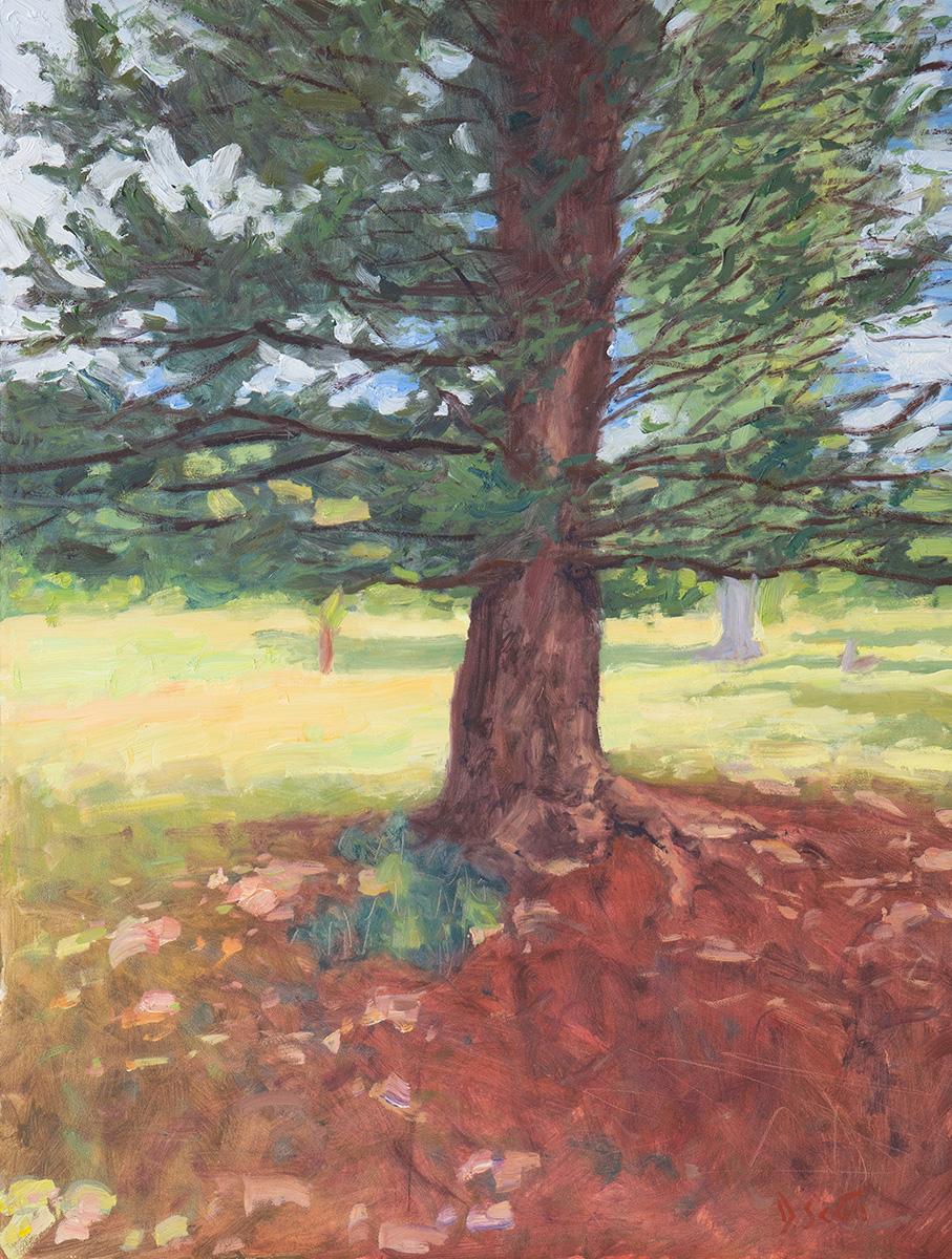 Dan Scott, Tree, Dappled Light, 2020