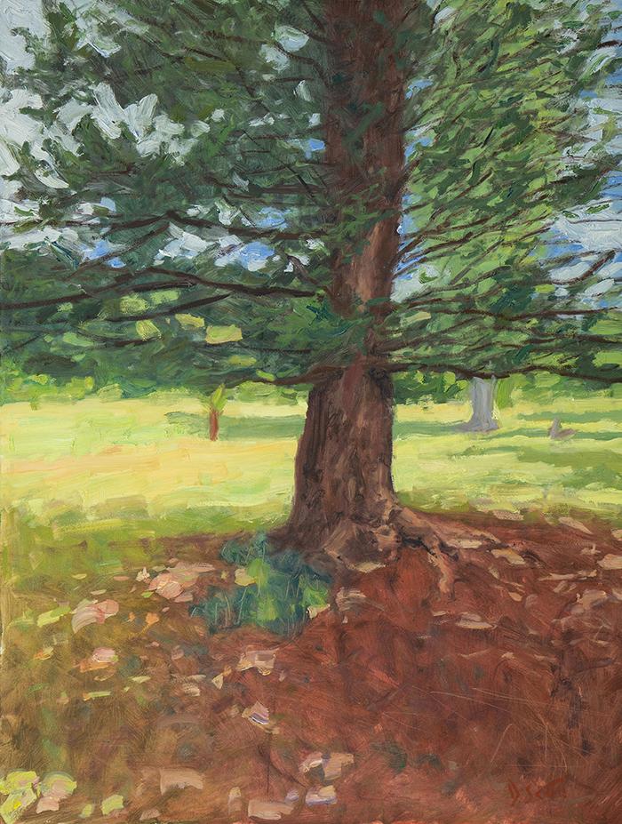 Dan Scott, Tree, Dappled Light, 2020, 1200W Web