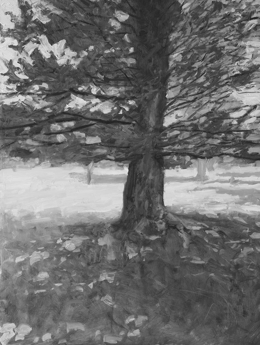 Dan Scott, Tree, Dappled Light, 2020 (Grayscale)