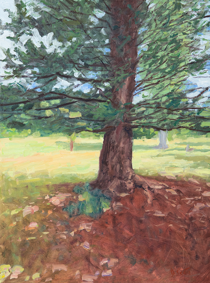 Dan Scott, Tree, Dappled Light, 2020, Sales Page