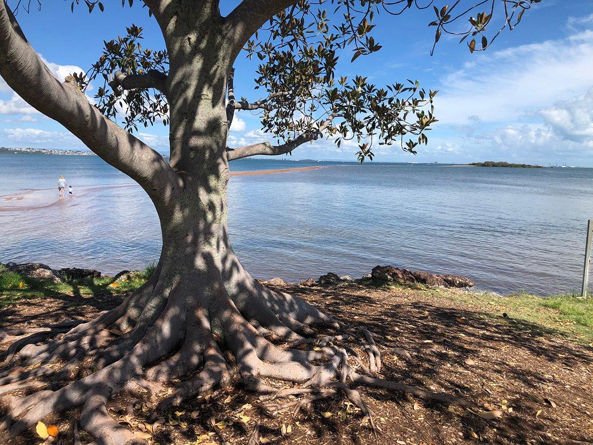 Dan Scott, Wellington Point, Reference Photo