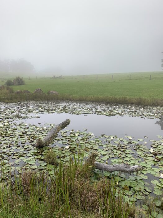 Spicers Peak Lodge, Maryvale QLD, March 2021 (40)