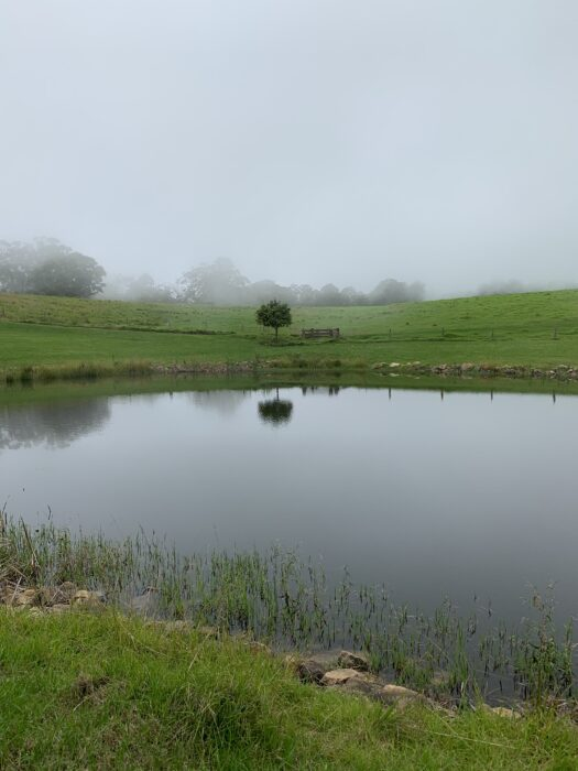 Spicers Peak Lodge, Maryvale QLD, March 2021 (49)