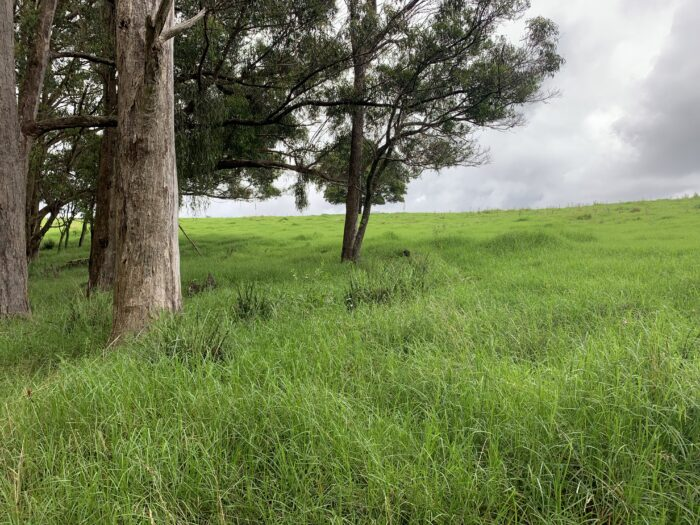 Spicers Peak Lodge, Maryvale QLD, March 2021 (69)