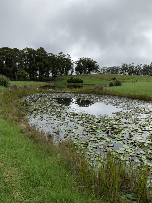 Spicers Peak Lodge, Maryvale QLD, March 2021 (77)