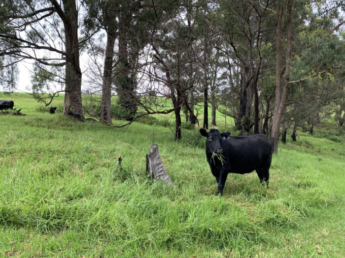 Spicers Peak Lodge, Maryvale QLD, March 2021 (83)