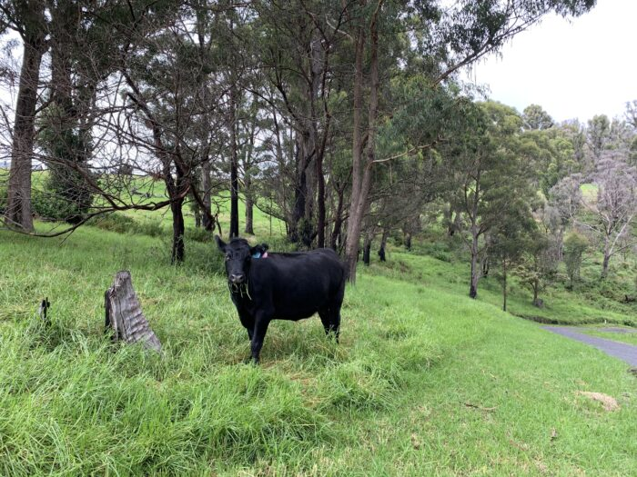 Spicers Peak Lodge, Maryvale QLD, March 2021 (84)