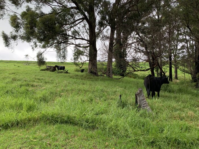 Spicers Peak Lodge, Maryvale QLD, March 2021 (86)