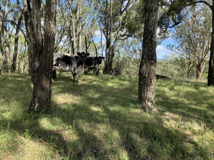 Spicers Peak Lodge, Maryvale QLD, March 2021 (88)