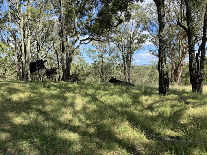 Spicers Peak Lodge, Maryvale QLD, March 2021 (89)