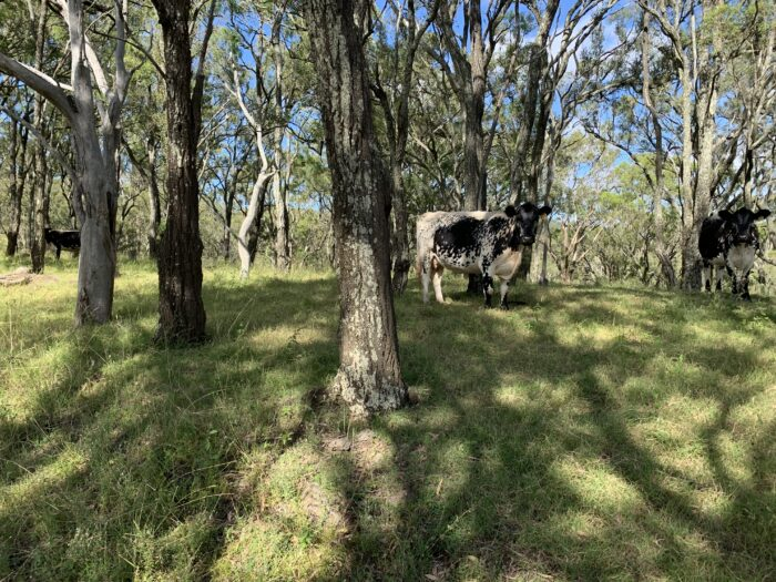 Spicers Peak Lodge, Maryvale QLD, March 2021 (90)