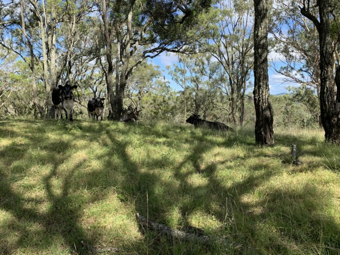 Spicers Peak Lodge, Maryvale QLD, March 2021 (91)