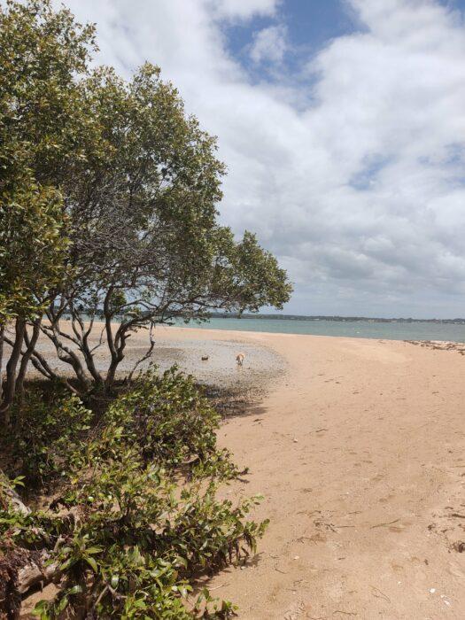 Wellington Point, QLD, Feb 2021 (12)