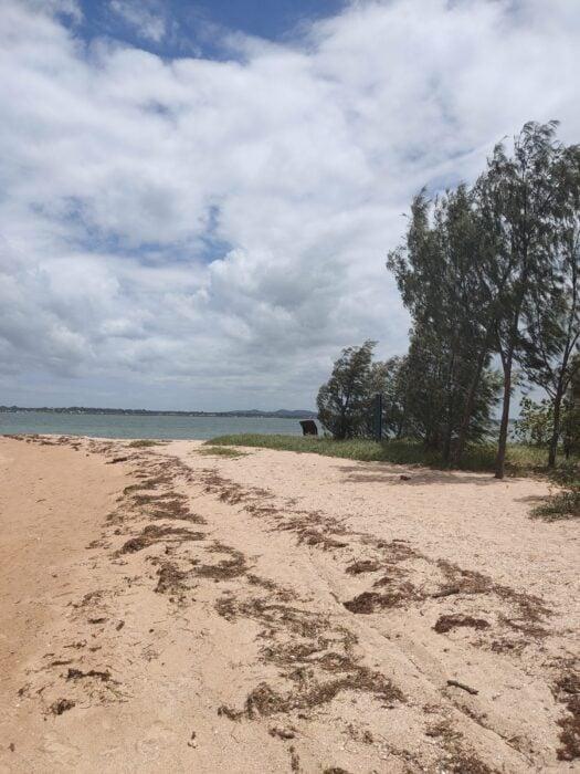 Wellington Point, QLD, Feb 2021 (13)