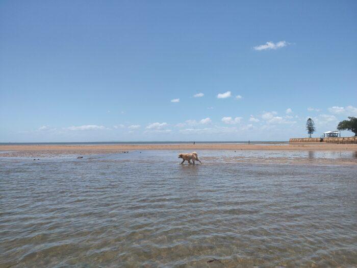 Wellington Point, QLD, Feb 2021 (14)