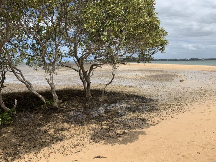 Wellington Point, QLD, Feb 2021 (17)