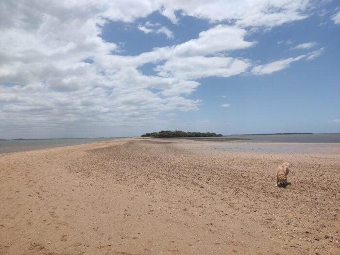 Wellington Point, QLD, Feb 2021 (5)