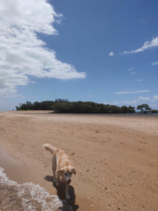 Wellington Point, QLD, Feb 2021 (7)