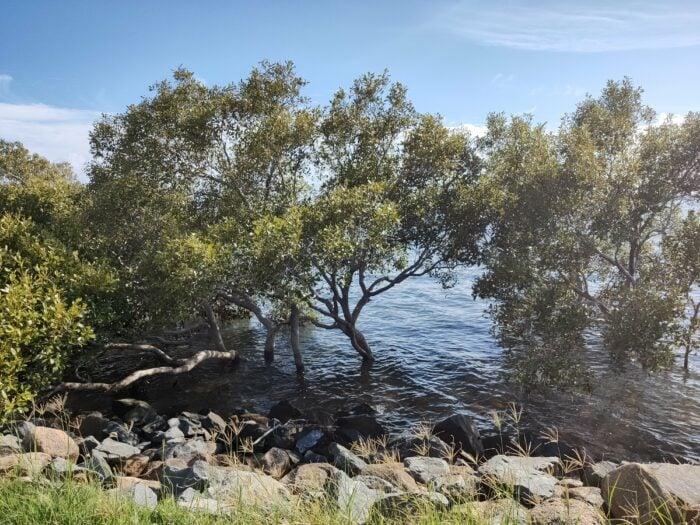 Wellington Point, QLD, Jan 2021 (12)