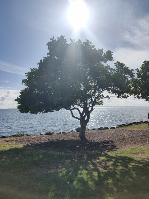Wellington Point, QLD, Jan 2021 (3)