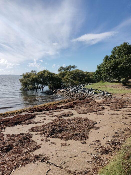 Wellington Point, QLD, Jan 2021 (8)