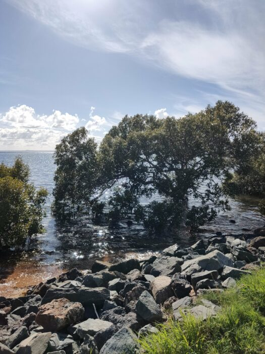 Wellington Point, QLD, Jan 2021 (9)