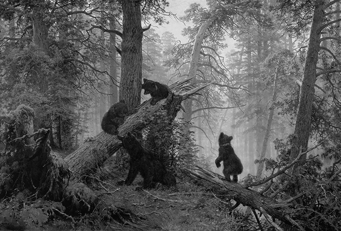greyscaled_Ivan Shishkin, Morning in a Pine Forest, 1889 700W