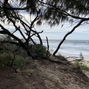 Gold Coast, Reference Photo (3)